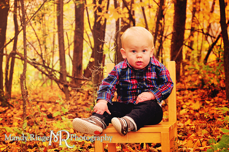 1 year old boy sitting on a chair in a grove of yellow maple trees // First birthday portraits // Leroy Oaks - St Charles, IL // by Mandy Ringe Photography