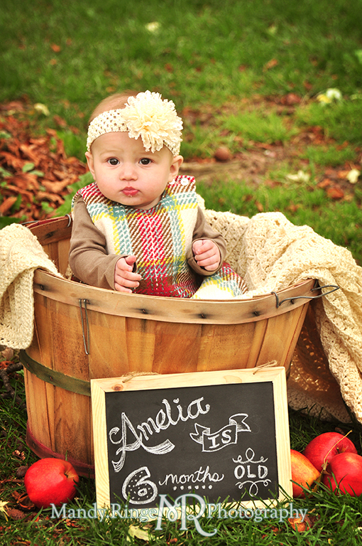 6 month old baby girl portraits // Sitting in an apple basket with a chalkboard sign // Cantigny Gardens - Wheaton, IL // by Mandy Ringe Photography