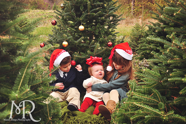 Family Christmas Portrait // Christmas Tree Farm // with red and gold decorated tree wearing Santa hats// by Mandy Ringe Photography