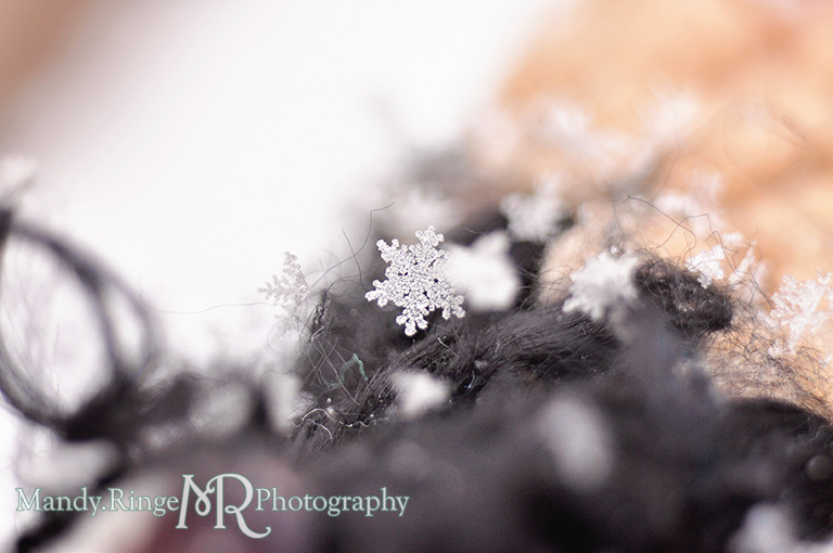 Snowflake macro // Black and tan scarf // St. Charles, IL // by Mandy Ringe Photography