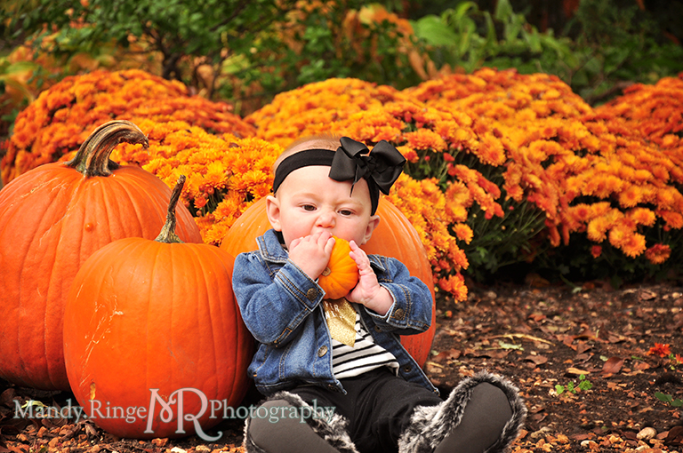 6 month old baby girl portraits // Sitting with pumpkins // Cantigny Gardens - Wheaton, IL // by Mandy Ringe Photography
